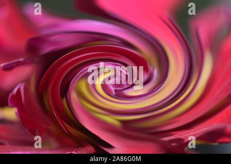 Patrón de espiral abstract efecto fractal creada a partir de la fotografía de una flor amarilla y roja.