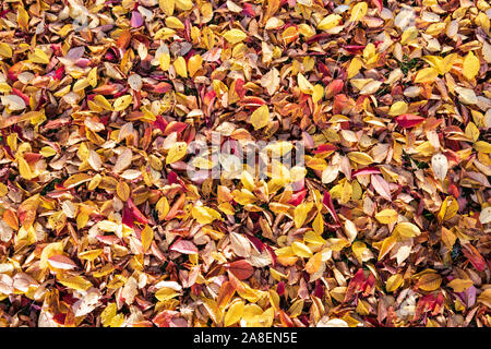 Hojas de naranja textura closeup. Otoño otoño folliage antecedentes