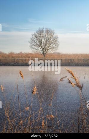 Solitario árbol y el canal congelado en una mañana de invierno en Kinderdijk. Reflexión sobre el hielo. Campo de hielo seco. Blue Sky. Sin hojas.