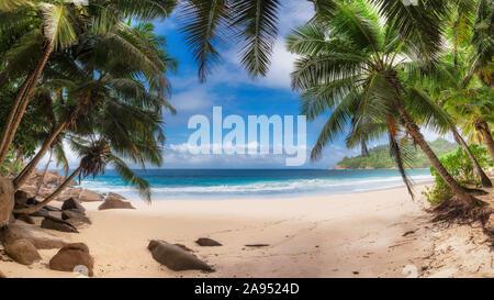 Palmeras en Sunny Beach