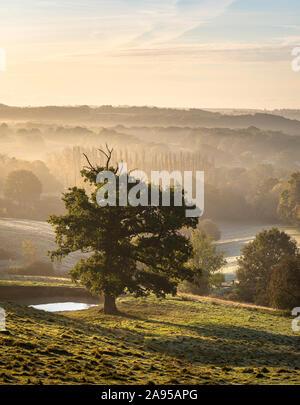 Un árbol en el AONB Weald de Kent en una brumosa mañana de otoño.