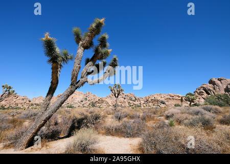 El Parque Nacional Joshua Tree National Park, California, EE.UU.