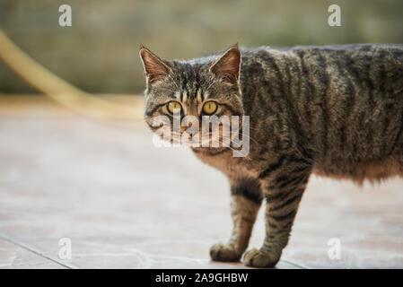 Una feroz cara de gato de cerca