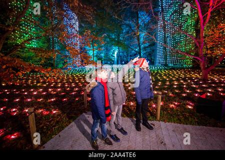 Londres, Reino Unido. 19 Nov, 2019. Una cascada de luces en cascada de Kew 18m-alta Treetop Walkway - Navidad en Kew Gardens - la presentación festiva anual de luces estacionales en Kew Gardens. Se ejecuta desde el 20 de noviembre de 2019 - 5 de enero de 2020. Crédito: Guy Bell/Alamy Live News