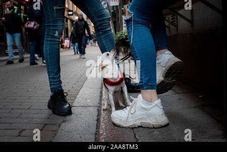 Chihuahua perro sentado en la calle mirando hacia arriba a sus dueños