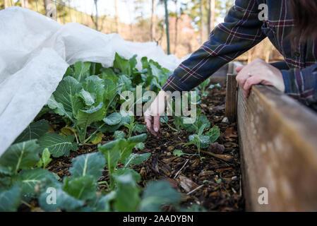 Fotos de jardinería de invierno en un jardín local centrado en la sostenibilidad y la seguridad alimentaria en la comunidad.