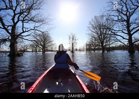 Quinta temporada viaje en canoa en el Parque Nacional Soomaa, mujer en canoa a remo vela en inundado spring forest, Estonia