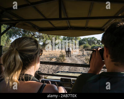 Bush elefante africano (Loxodonta africana), cerca de un camión safari en el Parque Nacional Luangwa del Sur, Zambia, África