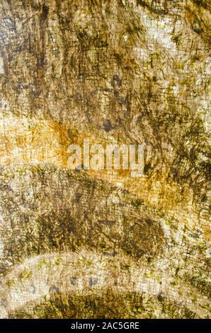 Una vista cercana de tapa (o paño kapa) después de haber sido teñidos y completó, artista de Roen Hufford, Isla Grande.