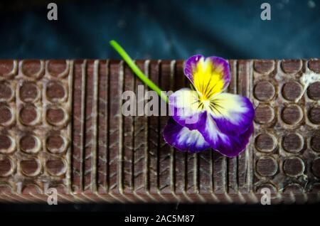 Una vista cercana de una tapa de madera (o herramienta kapa) golpeando con una pequeña flor pansy, Isla Grande.