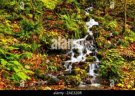 Flujo natural pequeño hacia abajo de la montaña, pasando por las rocas en el suelo que cubiertos con coloridas hojas que caen en el valle Oirase Towada cómo Hachim
