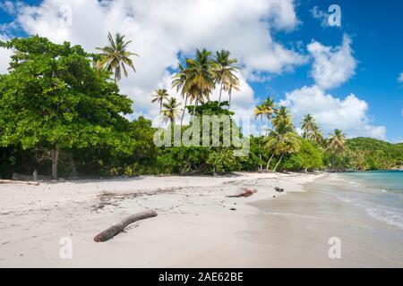 Manzanillo Beach en la isla de Providencia en Colombia.