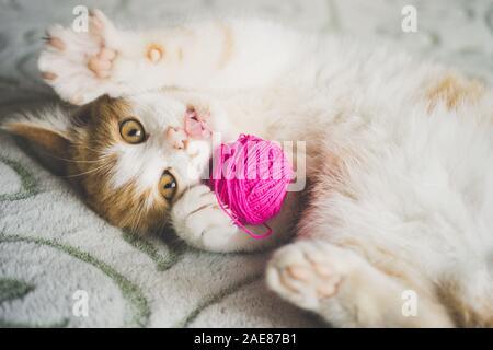 Jengibre gatito juega con una bola de hilo, pet tumbado en la cama, gracioso gato muestra la lengua.