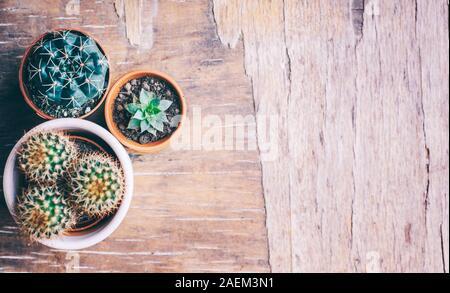 Varias plantas de cactus y suculentas en olla de barro sobre fondo de madera vintage desde arriba. Houseplant creciente afición y primavera de jardinería en casa laicos plana