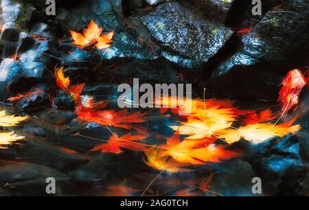 Sueño como imagen de la caída de las hojas en otoño han caído sobre roca mojada y una piscina de agua