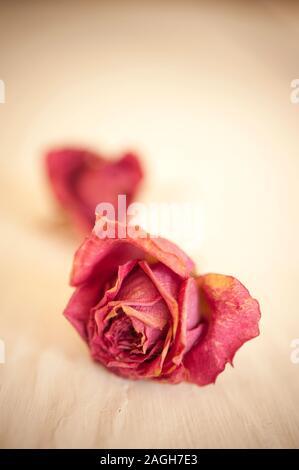 dos rosas secas