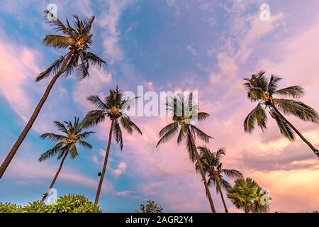 Mirando las palmeras durante el crepúsculo en Bali, Indonesia Foto de stock