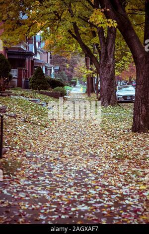 Acera cubierto de hojas caídas en otoño en Villa Alemana Barrio, Columbus, Ohio, EE.UU.