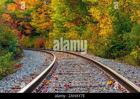 Una larga curva en las vías férreas de candidatos en el bosque mostrando coloridos hojas de otoño. Foto de stock