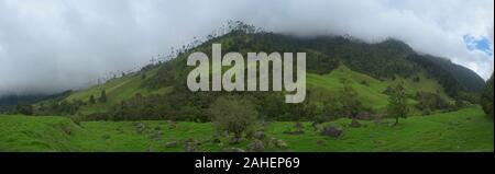 Palmas de cera (Ceroxylon quindiuense) panorama, Valle de Cocora, Salento, Colombia