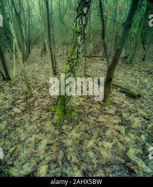Paisaje de bosques en la zona de Beacon Wood Country Park de Kent en invierno, Inglaterra, Reino Unido, Europa