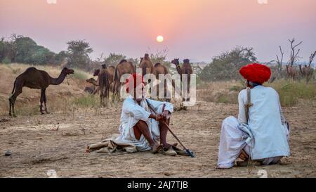 Pushkar, India - Nov 20, 2015. Rajasthani comerciantes de camellos sentados cerca de un rebaño de dromedarios cojeando, cerca de la Feria de camellos de Pushkar.