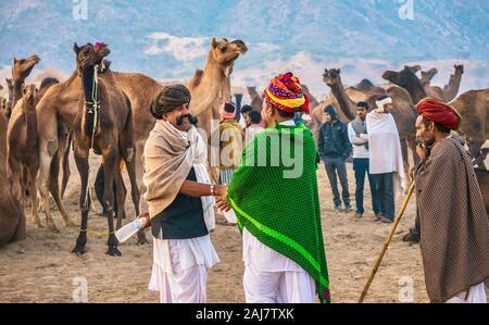 Pushkar, India - Nov 20, 2015. Después de la venta de un rebaño de camellos en la Feria de camellos de Pushkar en Rajasthan, India, el comprador y el vendedor se estrechan las manos.