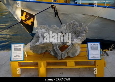 Ballena de Aleta de hueso de la columna vertebral en el puerto de Argostoli en la isla griega de Cefalonia, Mar Jónico, Grecia
