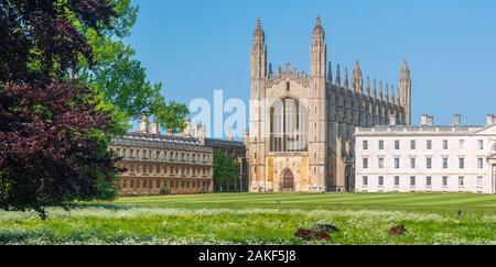 Reino Unido, Inglaterra, Cambridgeshire, Cambridge, The Backs, King's College, King's College Chapel, Cattle Pasting