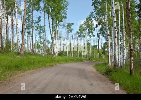 CO00205-00...Colorado - Aspen árboles que bordean por la carretera 129 en la sección alternativa Columbine de la gran brecha de ruta en bicicleta de montaña.