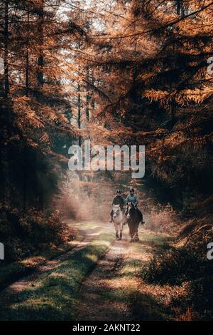 Luneberg, Alemania - 10 Nov, 2019: Dos mujeres esquestrians montar a caballo en los bosques Heide woodand con luz dorada del sol de otoño emitidos sobre ellas.