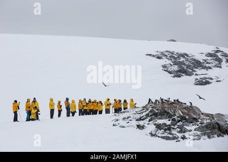 Isla Peterman, Península Antártica, Antártida Foto de stock