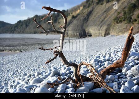 Madera de tiro engalanada y desgastada arrastrada a la playa de guijarros de Cold Knap Barry, Gales del Sur en una soleada mañana de Winters.