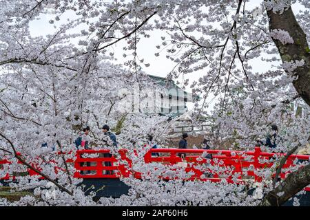 Hirosaki castillo parque cerezos flores en primavera temporada soleado día por la mañana. Belleza flor rosa sakura flores en el foso interior. Prefectura De Aomori