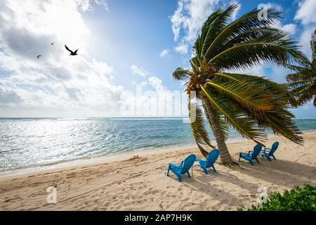 Sillas de playa en la playa con palmeras