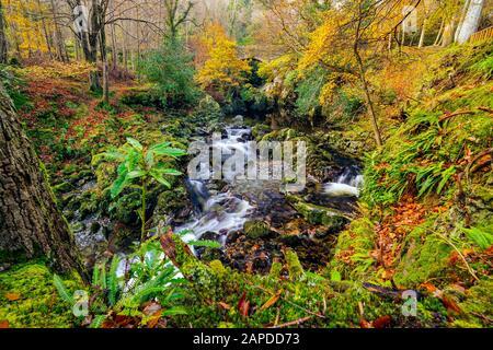 Cascadas y cascadas en arroyo o arroyo de montaña, entre rocas de musgo en el Parque Forestal Tollymore en otoño, Newcastle, County Down, Irlanda del Norte