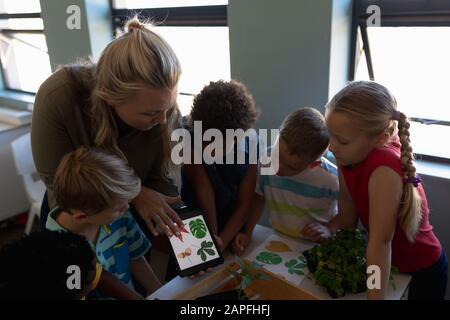 Profesora mujer mirando imágenes de hojas en una tableta de computadora para una lección de estudio de la naturaleza en un el