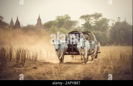 Hombre rural birmano que conduce carro de madera con heno en carretera polvoriento dibujado
