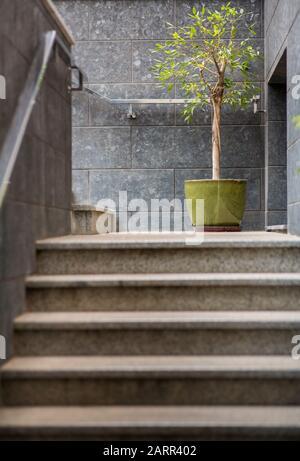 Escaleras de estilo loft y planta verde sobre paredes grises