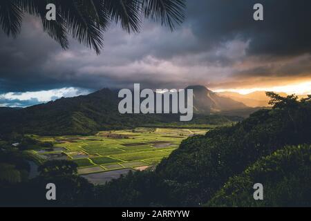 Hanalei valle taro campos atardecer