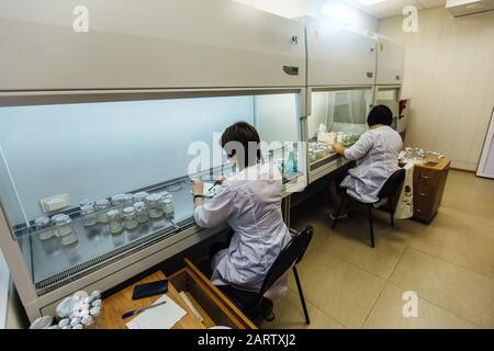 Los científicos trabajan en una caja laminar. Preparación de microplantas para la clonación in vitro