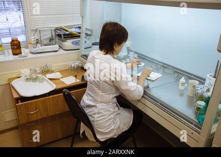 El científico trabaja en una caja laminar. Preparación de microplantas para la clonación in vitro