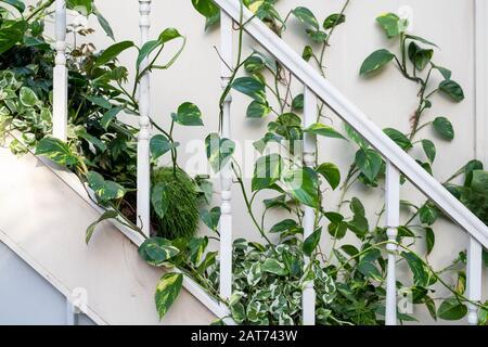 La exhibición De Adquisición de Giant Houseplant en el invernadero de RHS Wisley Gardens, Surrey, Reino Unido. Casa victoriana reclamada por plantas de casa. Enero De 2020