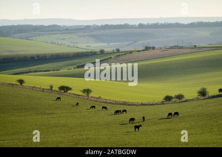 Los caballos pastan en el campo con vista al norte de Wessex Downs bajo la luz del sol del invierno, East Garston, West Berkshire, Inglaterra, Reino Unido, Europa