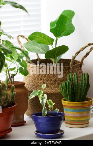 Varias plantas interiores en macetas y una cesta de bambú en el alféizar.