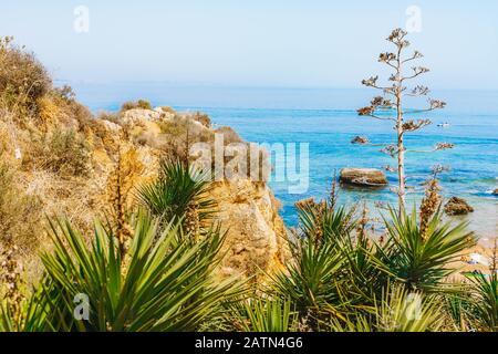 Azul turquesa y acantilado rocoso en una costa de Portugal en la región del Algarve. Hermosa vista del paisaje del Océano Atlántico. Palmeras verdes y plantas en primer plano
