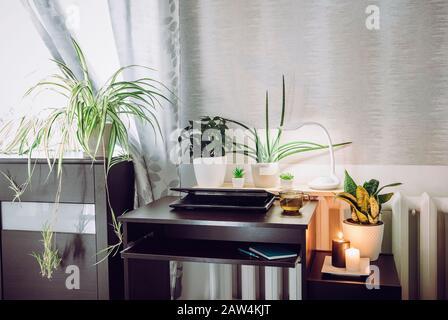 Gris sexo neutro oficina en casa con mucho de tranquilizar verde vivo macetas plantas de flores creciendo. Concepto de estilo de vida saludable y verde.