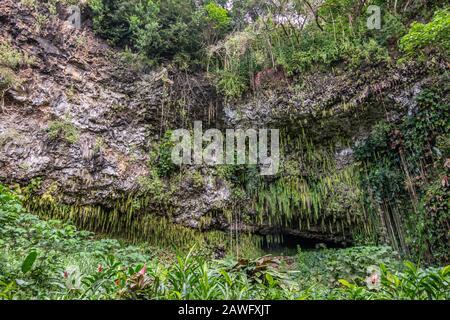 Kamokila Village, Kauai, Hawaii, Estados Unidos. - 16 de enero de 2020: Las plantas crecen frente a la gruta de Fern escondida por helecho espada verde, árboles y plantas en el fondo