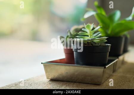 home jardinería, pequeños cactuses y plantas ornamentales en macetas de plástico negro en el suelo de cemento
