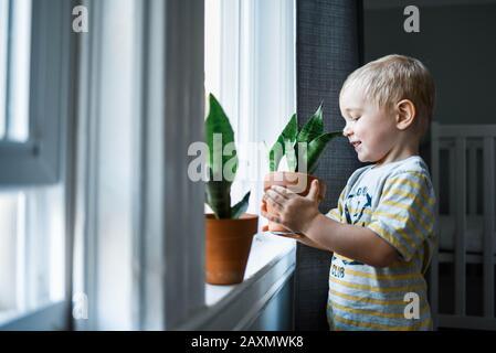 Niño poniendo sus plantas en un alféizar de ventana para más luz.
